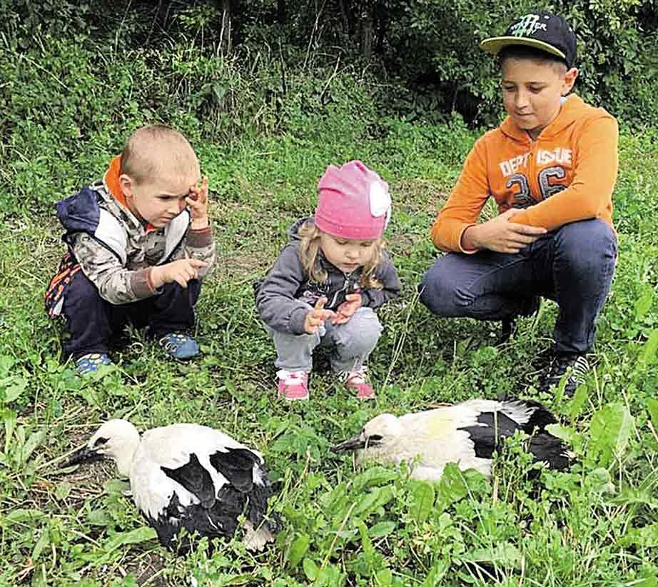 Малих лелеченят врятували у Літинському районі