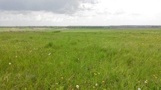 48 гектарів землі використовували не законно