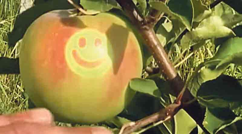 «Усміхнені» яблука — родзинка вінницького ринку «Урожай»