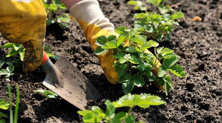 Садово-городні хитрощі котрі стануть у пригоді усім дачникам