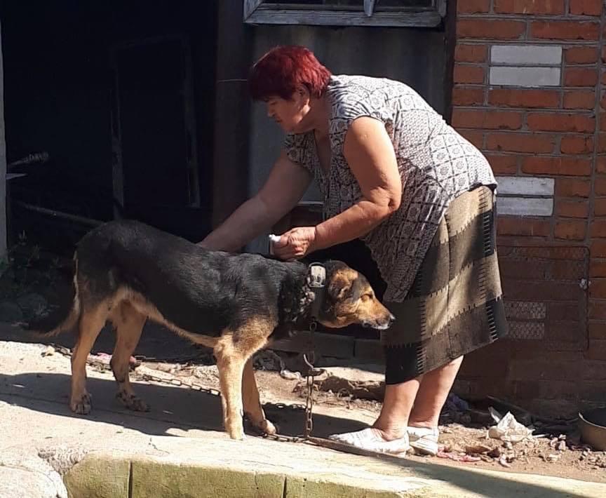 Бершадчанка, яка прив'язала до машини собаку і тягнула за місто, не віддала його новому господарю