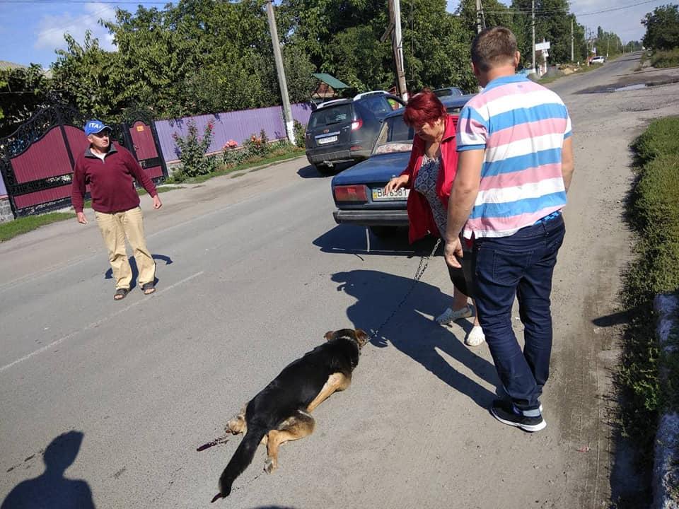 Бершадчанка із таксистом прив'язали собаку до машини і тягнули містом. Песика врятували люди