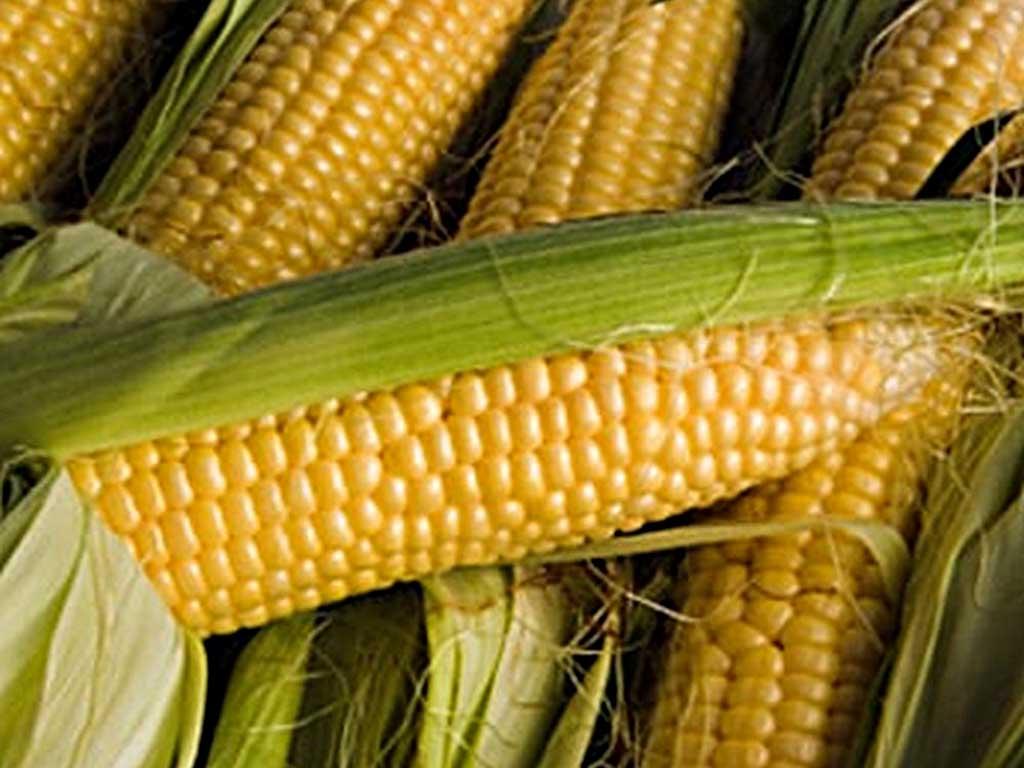 Завод з переробки кукурудзи збудують у Демківці