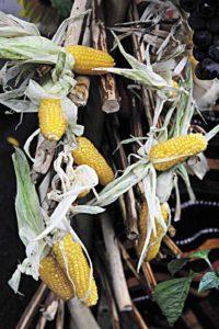 Консервована кукурудза корисніша від вареної і поп-корну
