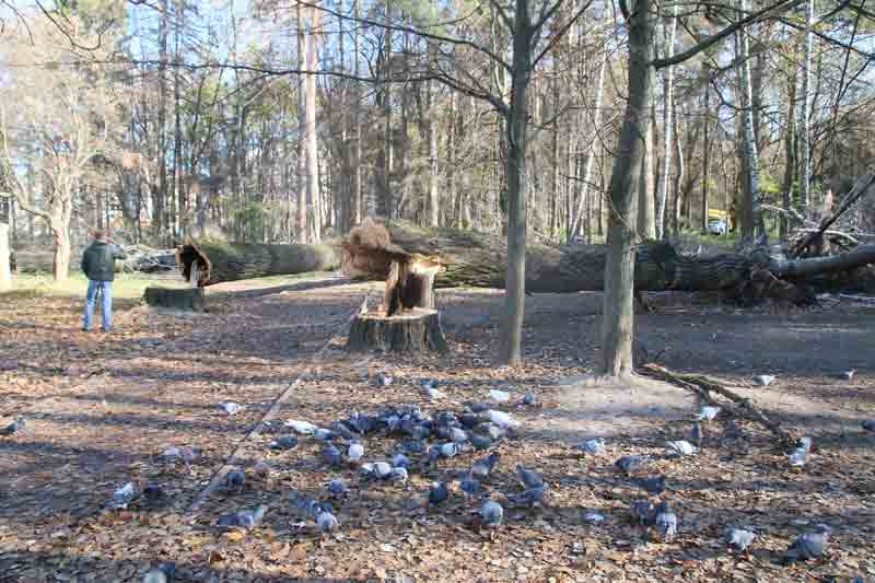 450 тисяч компенсації заплатила психлікарня Ющенка за падіння дерев на авто сусідів (відео)