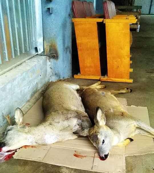64 тисячі гривень штрафу за браконьєрський відстріл двох козуль